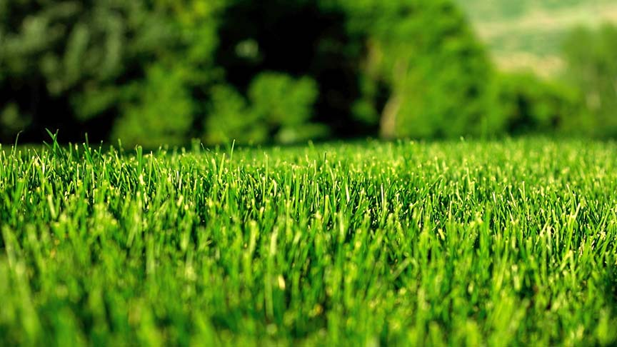 Commercial lawn in Greenacres Fl beautiful green grass