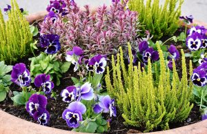 Professional Affordable HOA Landscaping