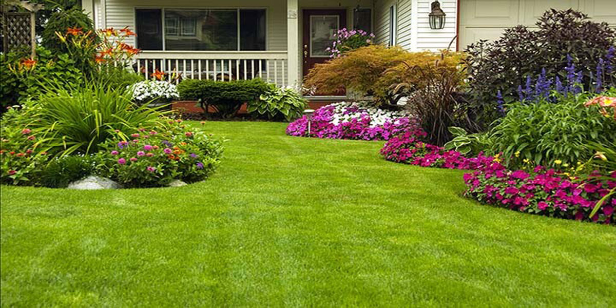 Pest Control Lawn Maintenance