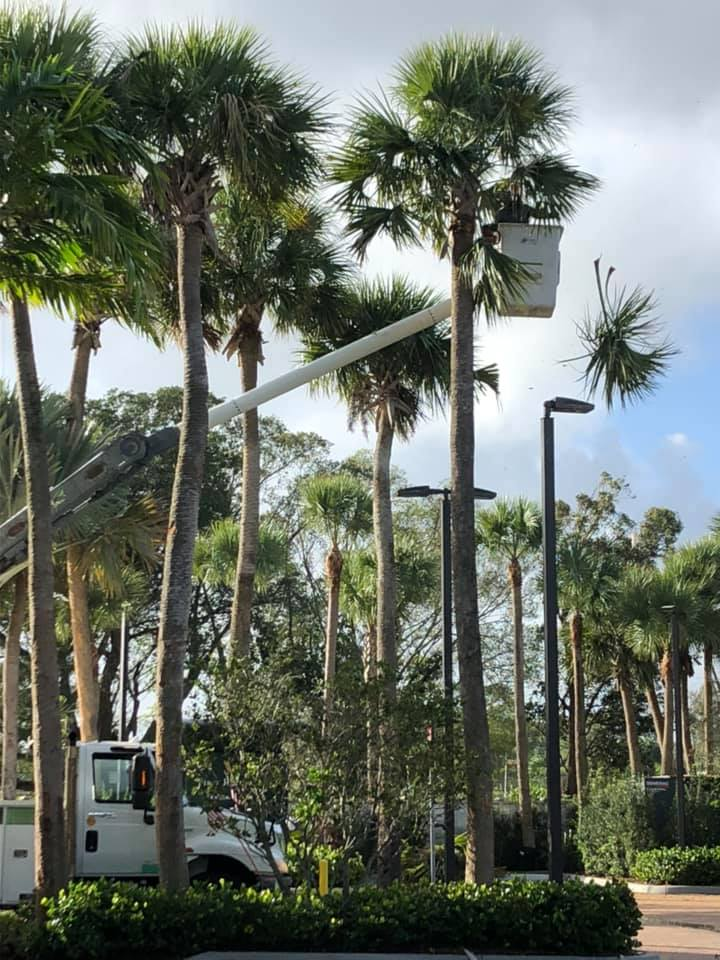Professional Commercial and HOA landscaping trees